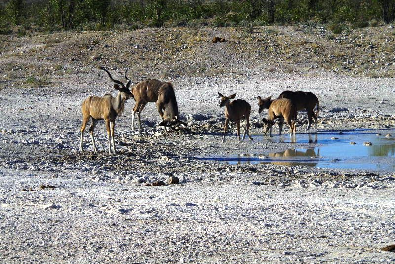 ナミビアの旅(37) エトーシャ国立公園のサファリドライブ(1)_c0011649_031211.jpg