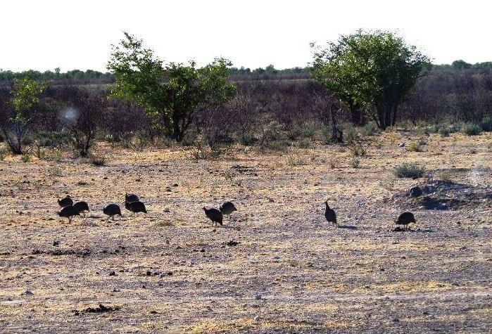 ナミビアの旅(37) エトーシャ国立公園のサファリドライブ(1)_c0011649_0394783.jpg