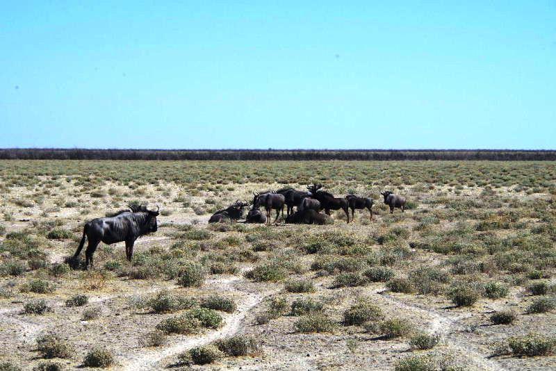 ナミビアの旅(37) エトーシャ国立公園のサファリドライブ(1)_c0011649_0443826.jpg