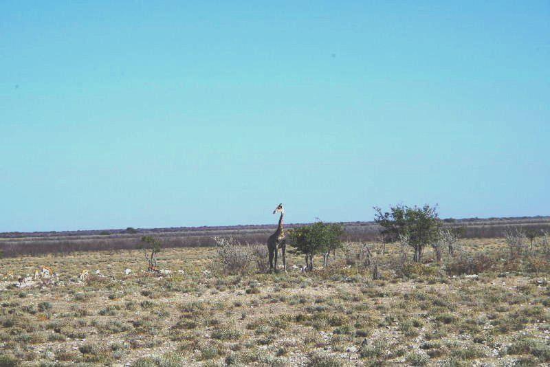 ナミビアの旅(37) エトーシャ国立公園のサファリドライブ(1)_c0011649_051822.jpg