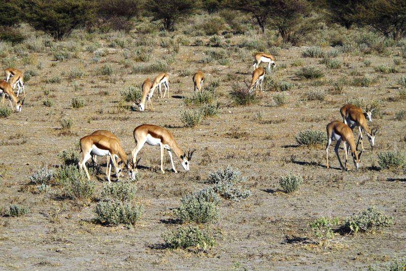 ナミビアの旅(37) エトーシャ国立公園のサファリドライブ(1)_c0011649_07257.jpg