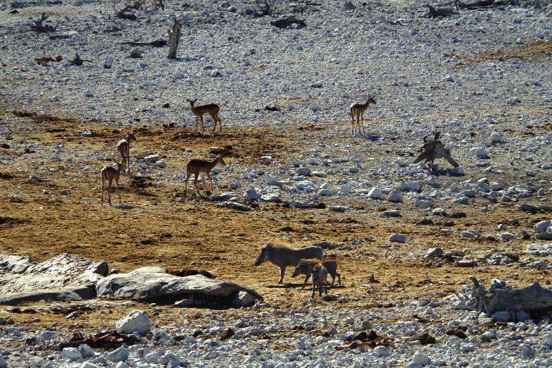 ナミビアの旅(37) エトーシャ国立公園のサファリドライブ(1)_c0011649_11151.jpg
