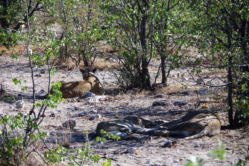 ナミビアの旅(37) エトーシャ国立公園のサファリドライブ(1)_c0011649_115229.jpg