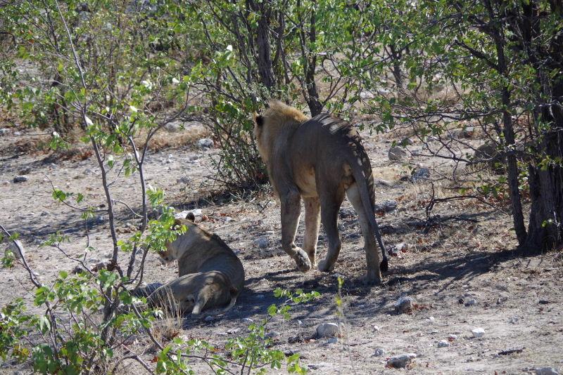 ナミビアの旅(37) エトーシャ国立公園のサファリドライブ(1)_c0011649_1162582.jpg
