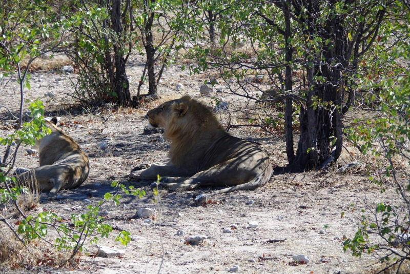 ナミビアの旅(37) エトーシャ国立公園のサファリドライブ(1)_c0011649_116347.jpg