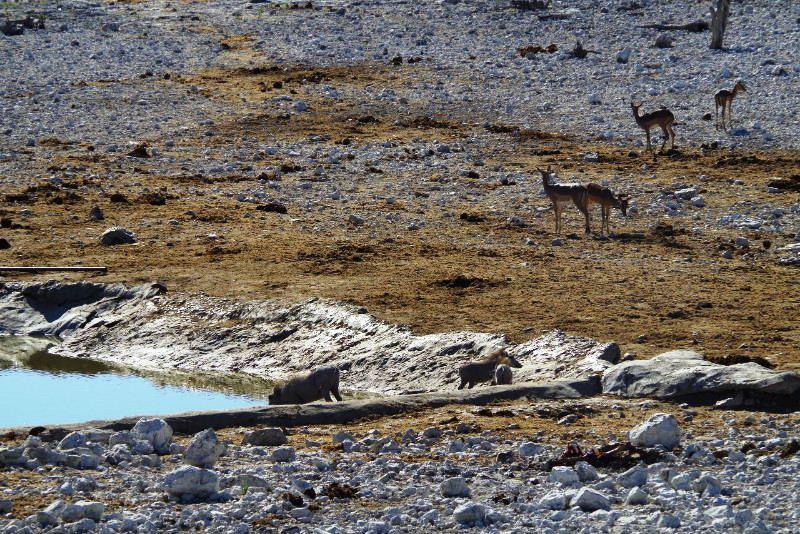 ナミビアの旅(37) エトーシャ国立公園のサファリドライブ(1)_c0011649_1231083.jpg
