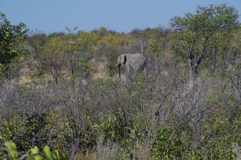 ナミビアの旅(37) エトーシャ国立公園のサファリドライブ(1)_c0011649_1293185.jpg