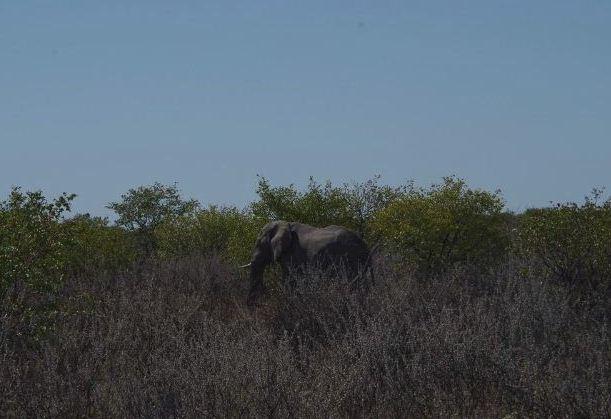 ナミビアの旅(37) エトーシャ国立公園のサファリドライブ(1)_c0011649_1295891.jpg