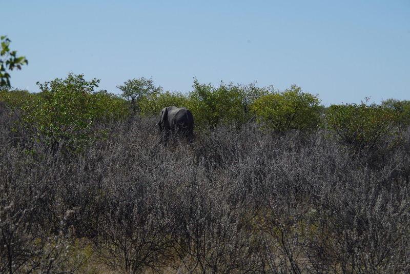 ナミビアの旅(37) エトーシャ国立公園のサファリドライブ(1)_c0011649_1334738.jpg