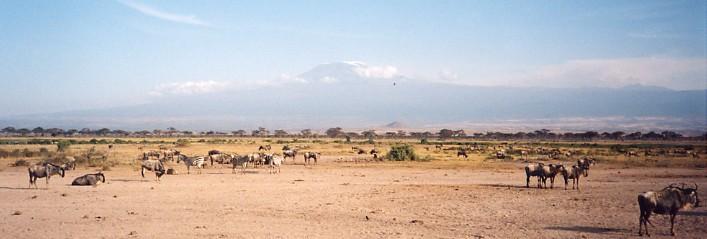 ナミビアの旅(37) エトーシャ国立公園のサファリドライブ(1)_c0011649_18185649.jpg