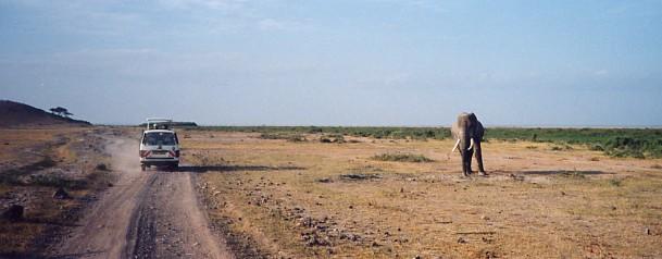 ナミビアの旅(37) エトーシャ国立公園のサファリドライブ(1)_c0011649_185198.jpg