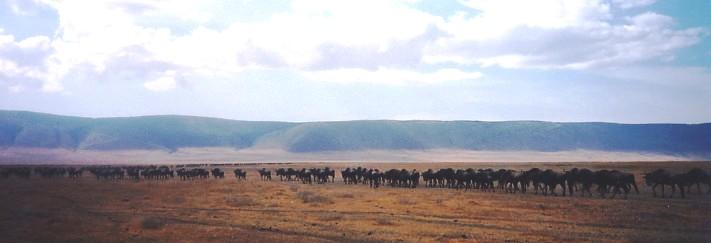 ナミビアの旅(37) エトーシャ国立公園のサファリドライブ(1)_c0011649_186742.jpg
