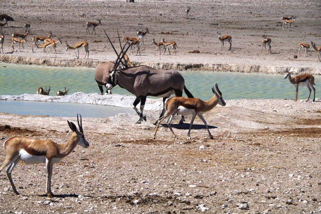 ナミビアの旅(37) エトーシャ国立公園のサファリドライブ(1)_c0011649_23521220.jpg