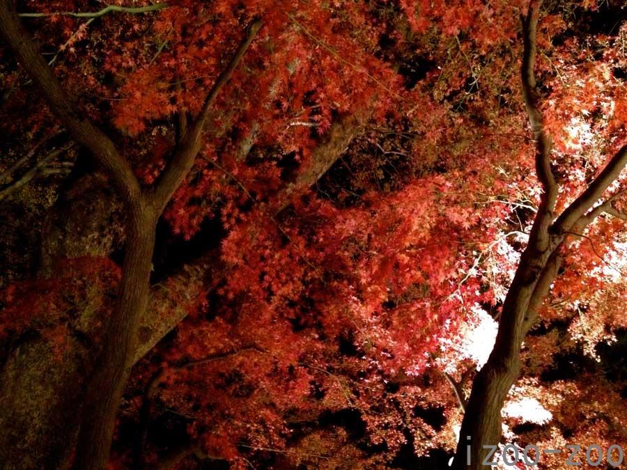夜の紅葉狩り_c0223095_19345470.jpg