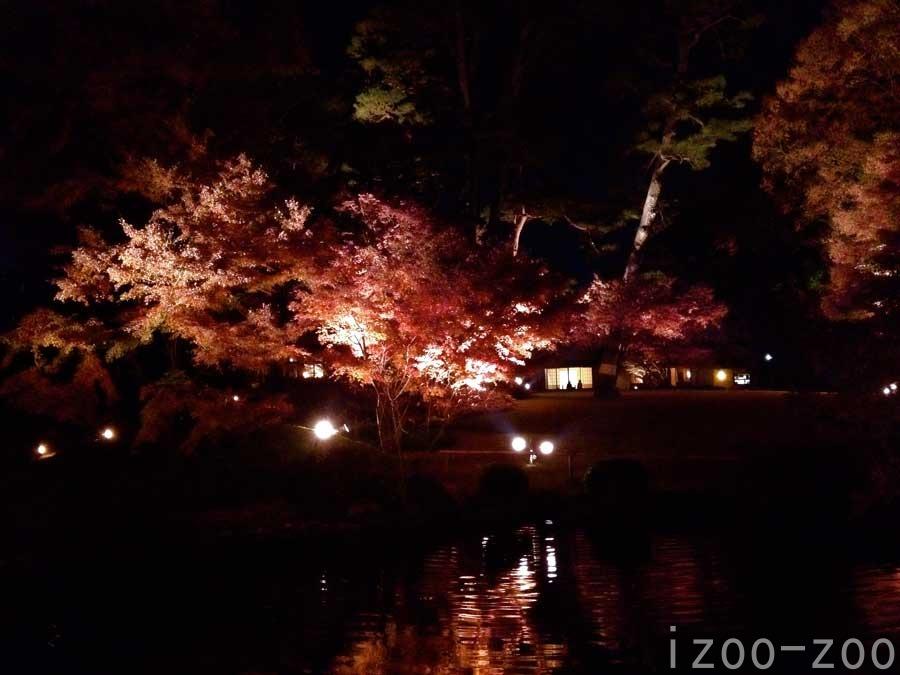 夜の紅葉狩り_c0223095_19354215.jpg