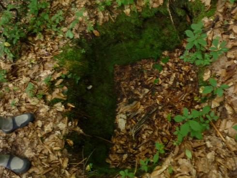 只見のブナの森散策と雪の恵みについての話 新国勇さんからお聞きしたこと_f0227395_15322385.jpg