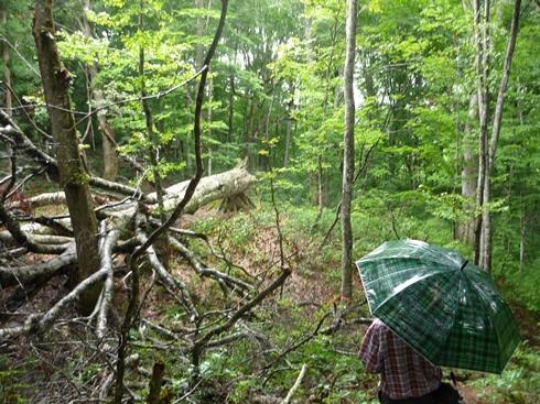 只見のブナの森散策と雪の恵みについての話 新国勇さんからお聞きしたこと_f0227395_16243167.jpg