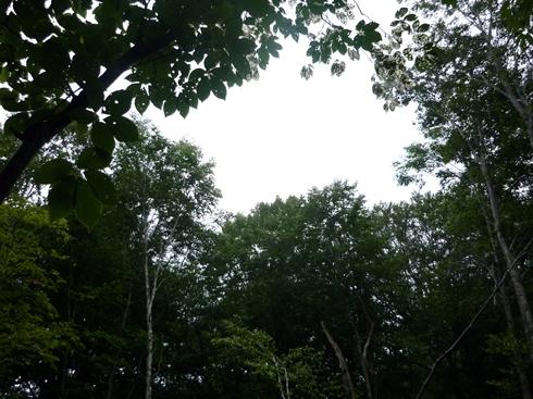 只見のブナの森散策と雪の恵みについての話 新国勇さんからお聞きしたこと_f0227395_163426.jpg