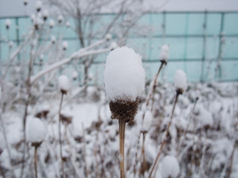 雪降ったりやんだり..._d0072917_19393449.jpg