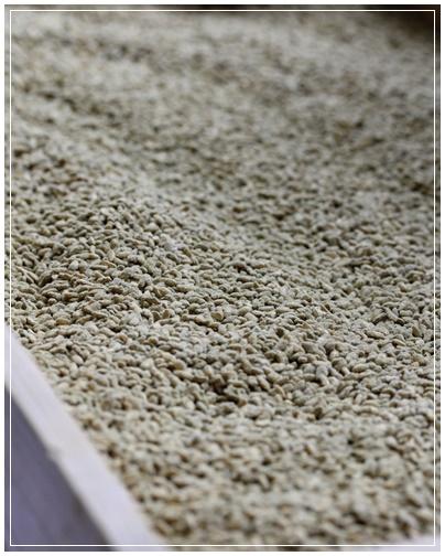 鹿児島  黒酢生産を見学_c0141025_0144183.jpg