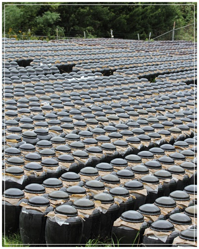 鹿児島  黒酢生産を見学_c0141025_03973.jpg