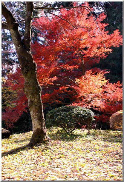 妙義山周辺_d0123528_18445577.jpg