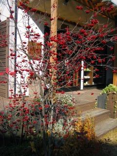 アロニアの紅い実と編み物_b0100229_1238510.jpg