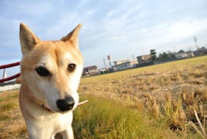 12/06 お散歩_e0236430_193322.jpg