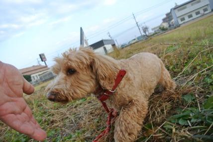 12/06 お散歩_e0236430_1934556.jpg