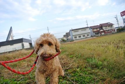 12/06 お散歩_e0236430_1935080.jpg
