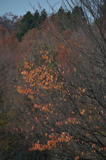 奥卯辰山健民公園(秋模様4)_c0093046_92296.jpg