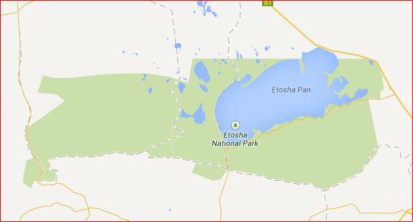 ナミビアの旅(38) エトーシャ国立公園のサファリドライブ(2)_c0011649_553343.jpg