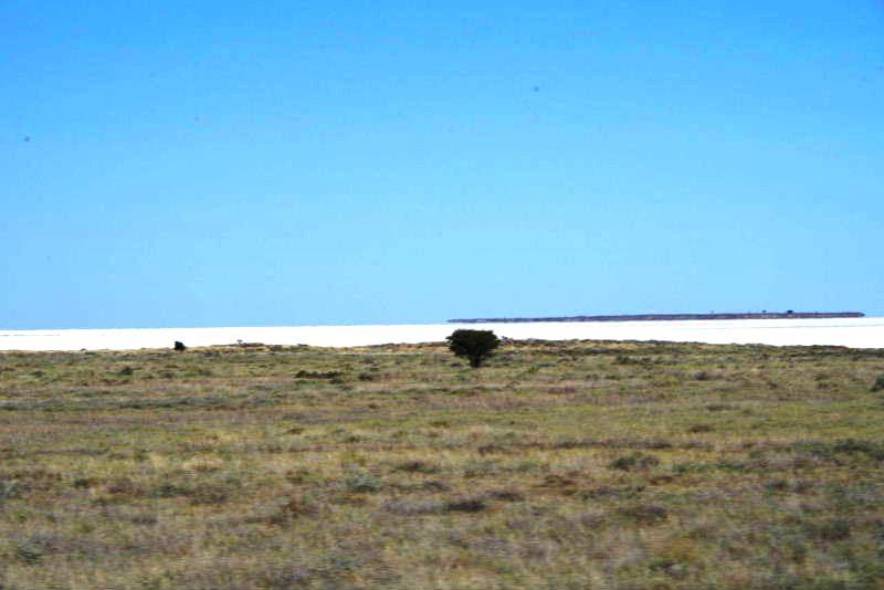 ナミビアの旅(38) エトーシャ国立公園のサファリドライブ(2)_c0011649_5554911.jpg
