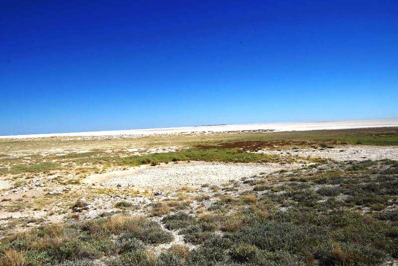 ナミビアの旅(38) エトーシャ国立公園のサファリドライブ(2)_c0011649_611572.jpg