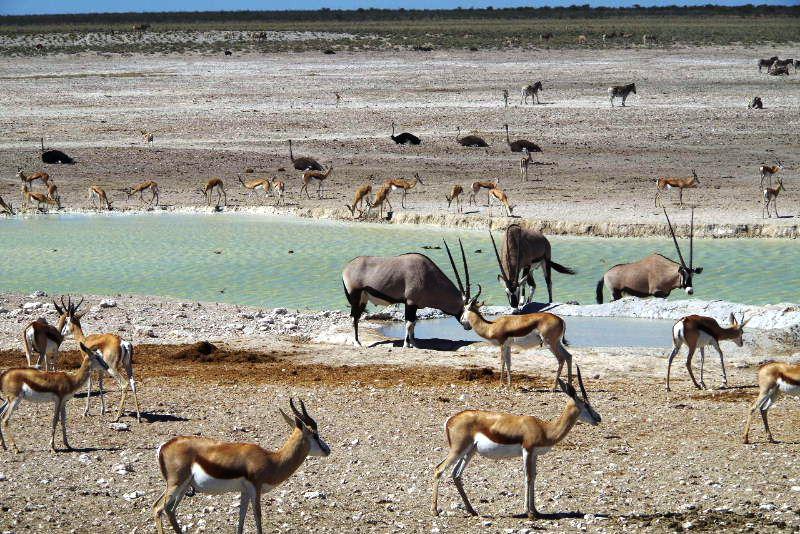 ナミビアの旅(38) エトーシャ国立公園のサファリドライブ(2)_c0011649_7135583.jpg