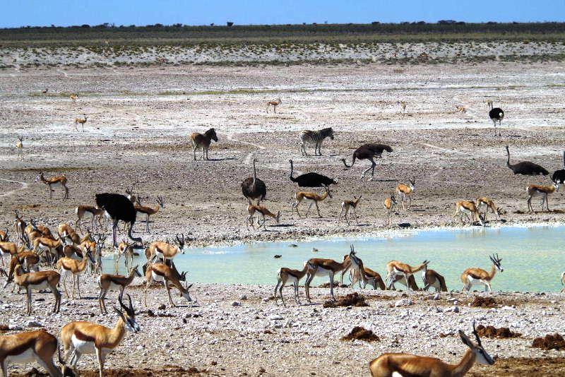 ナミビアの旅(38) エトーシャ国立公園のサファリドライブ(2)_c0011649_7145218.jpg