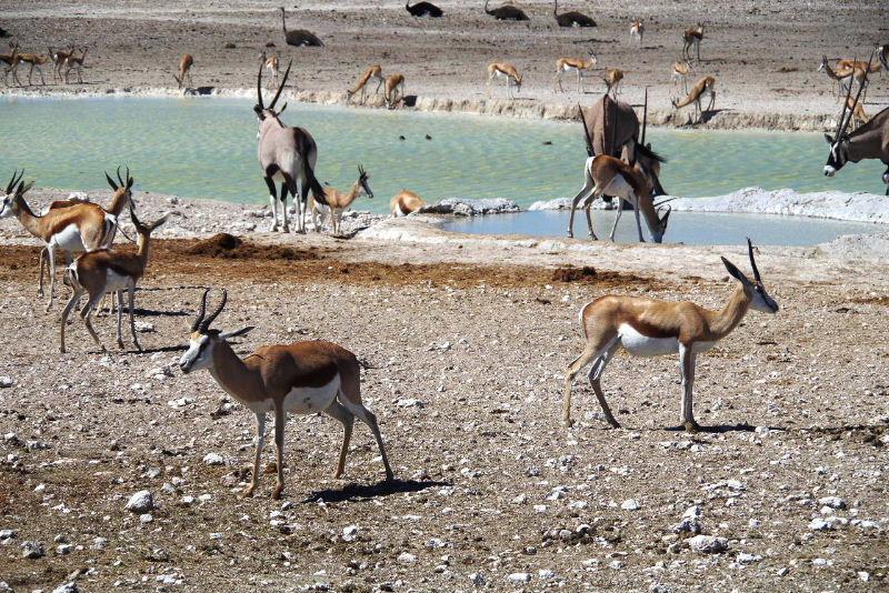 ナミビアの旅(38) エトーシャ国立公園のサファリドライブ(2)_c0011649_7152010.jpg