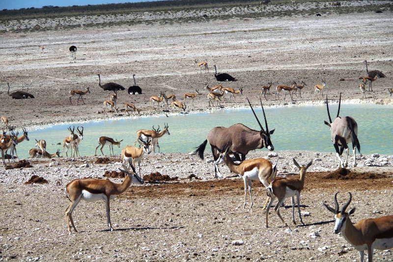 ナミビアの旅(38) エトーシャ国立公園のサファリドライブ(2)_c0011649_7154725.jpg