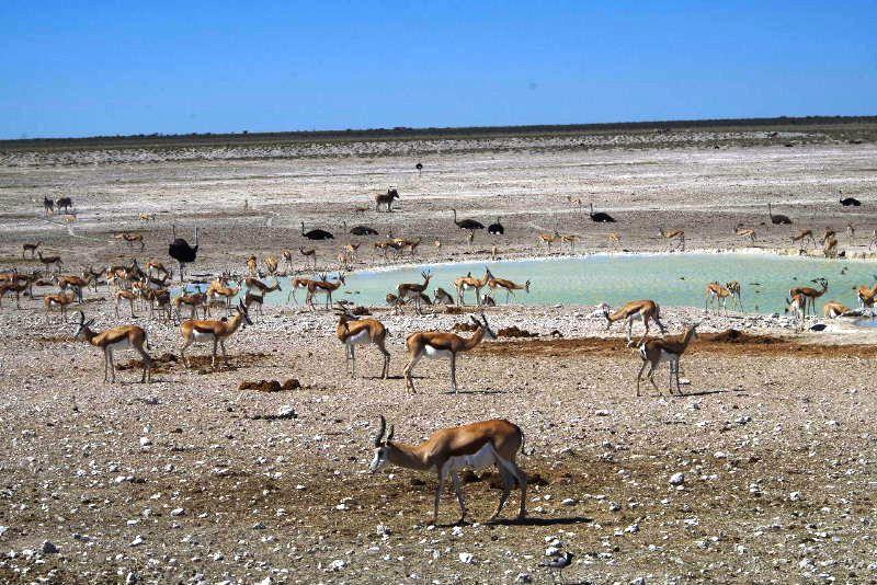 ナミビアの旅(38) エトーシャ国立公園のサファリドライブ(2)_c0011649_7175915.jpg