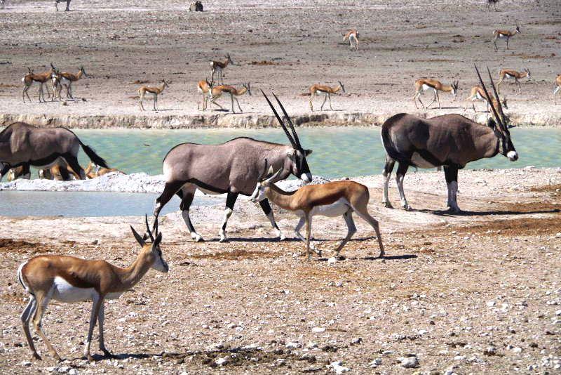 ナミビアの旅(38) エトーシャ国立公園のサファリドライブ(2)_c0011649_7182265.jpg