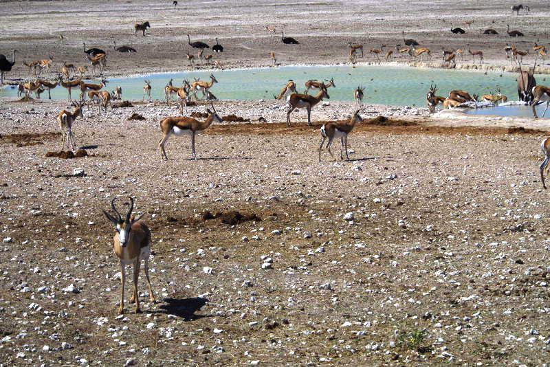 ナミビアの旅(38) エトーシャ国立公園のサファリドライブ(2)_c0011649_7191961.jpg