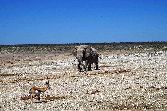 ナミビアの旅(38) エトーシャ国立公園のサファリドライブ(2)_c0011649_733353.jpg