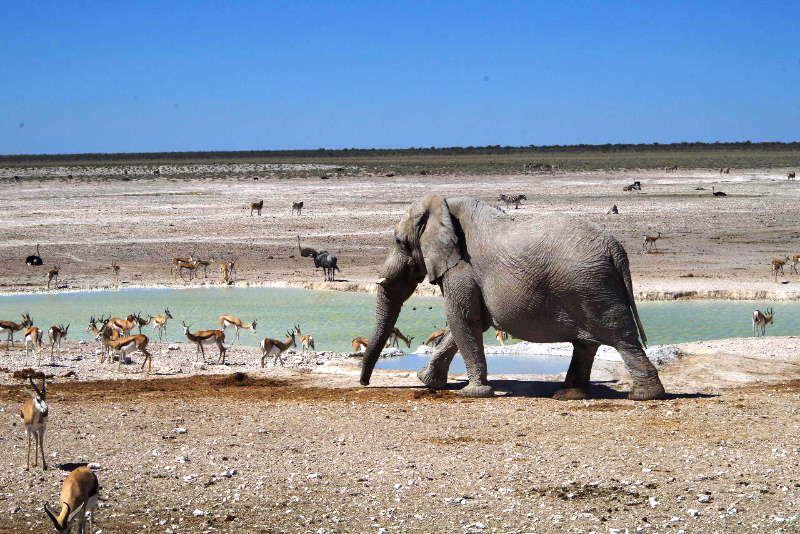 ナミビアの旅(38) エトーシャ国立公園のサファリドライブ(2)_c0011649_733444.jpg