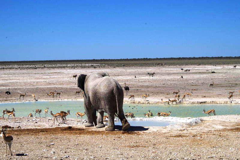 ナミビアの旅(38) エトーシャ国立公園のサファリドライブ(2)_c0011649_734085.jpg