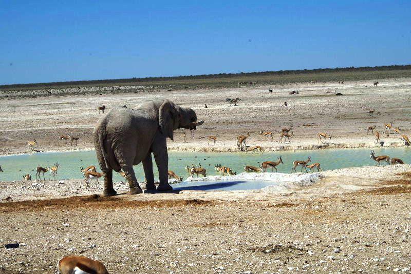 ナミビアの旅(38) エトーシャ国立公園のサファリドライブ(2)_c0011649_7341650.jpg