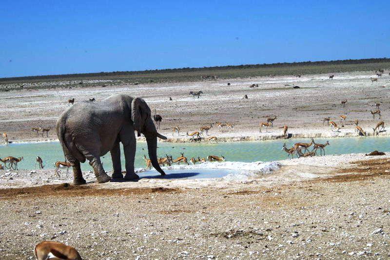 ナミビアの旅(38) エトーシャ国立公園のサファリドライブ(2)_c0011649_8215430.jpg
