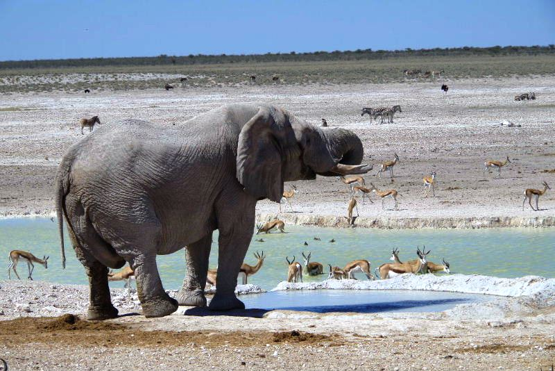 ナミビアの旅(38) エトーシャ国立公園のサファリドライブ(2)_c0011649_8225246.jpg
