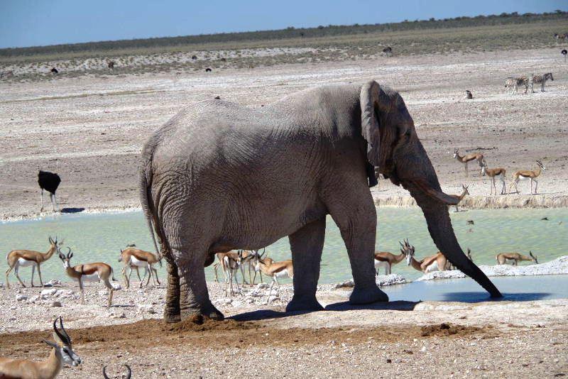 ナミビアの旅(38) エトーシャ国立公園のサファリドライブ(2)_c0011649_8244816.jpg