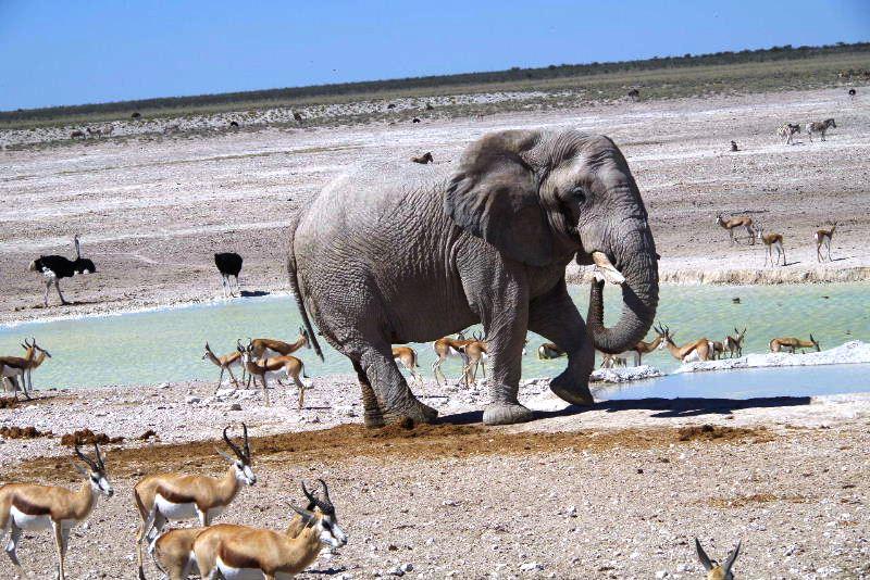 ナミビアの旅(38) エトーシャ国立公園のサファリドライブ(2)_c0011649_825932.jpg