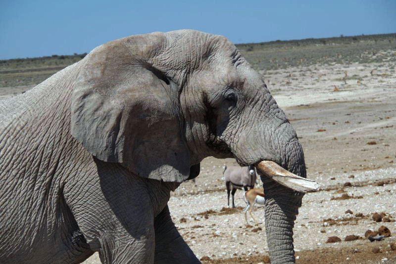 ナミビアの旅(38) エトーシャ国立公園のサファリドライブ(2)_c0011649_826625.jpg